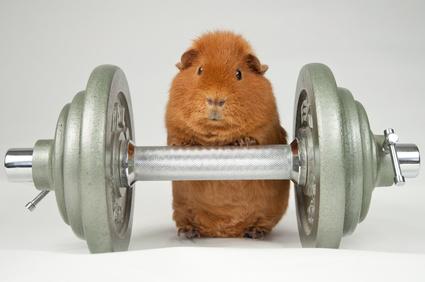 Gewichtheber © Michael Tieck - Fotolia.com