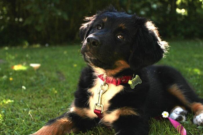 Hundemädchen Elly